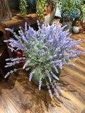 Long stem Lavender Flower
