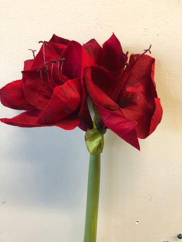Red Silk Amaryllis Spray Artificial flower