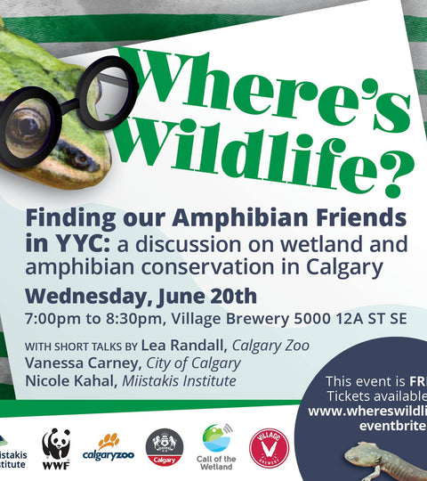 Science Cafe: Where's Wildlife? Finding Amphibian Friends in YYC