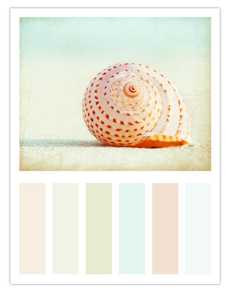 "Beach Decor Color Scheme Idea by Carolyn Cochrane.... Inspired by her Shell Photograph, ""Seashell Voices"""