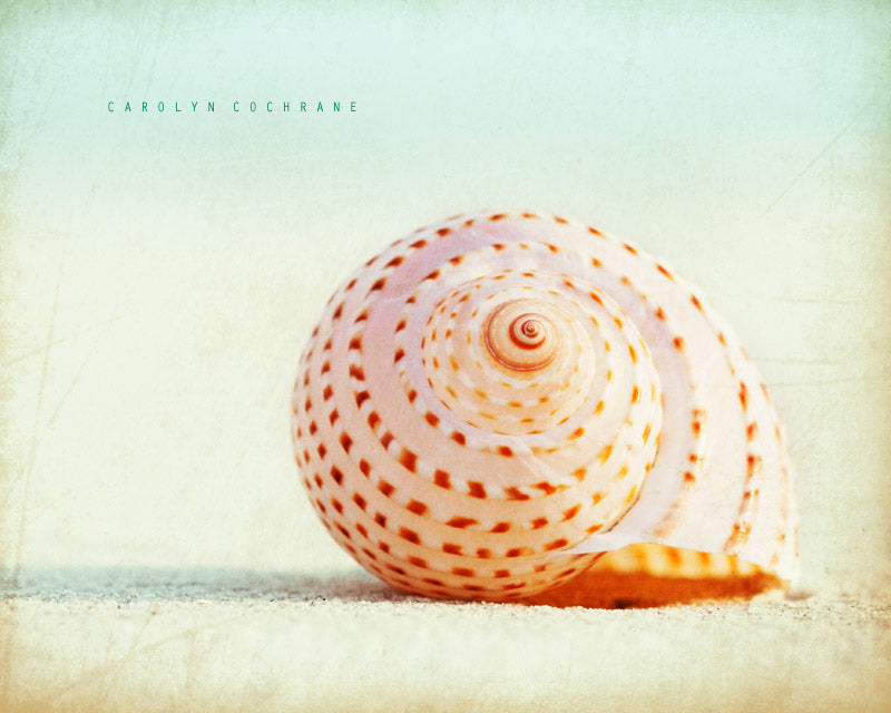 Seashell Photography Art by carolyncochrane.com