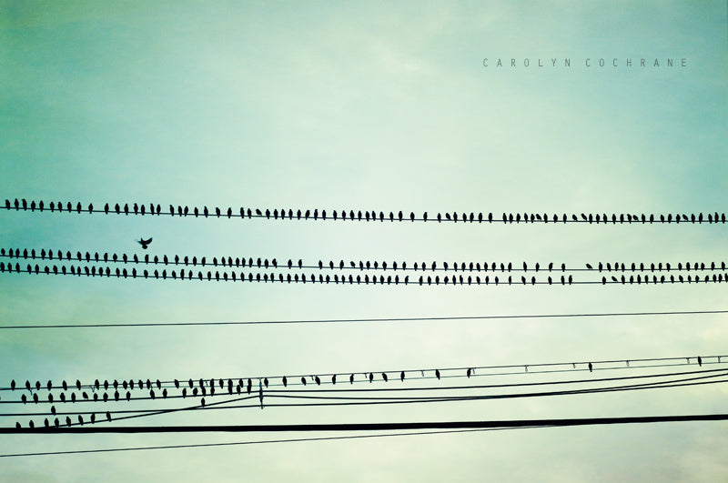 Mint Birds on Wire Photography by carolyncochrane.com
