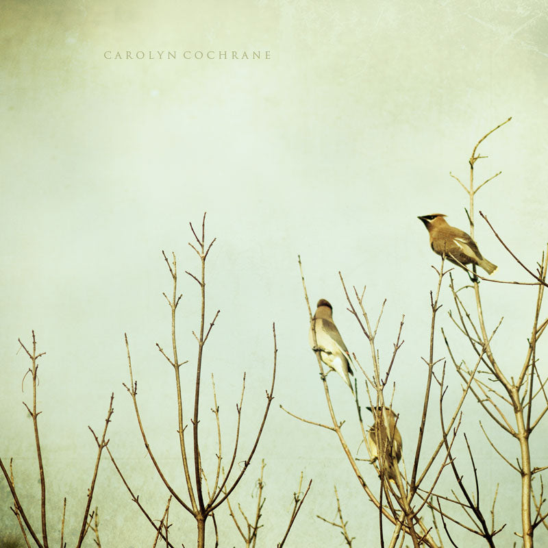 Birds in Tree Photography by carolyncochrane.com