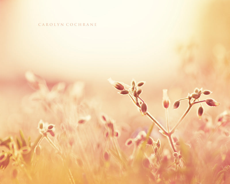 Pastel Nature Photography Print by carolyncochrane.com