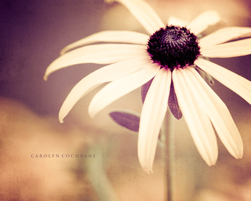 Brown Burgundy Flower by carolyncochrane.com