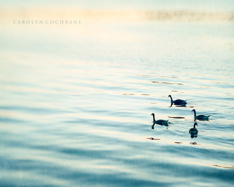 Birds on Water Photo by carolyncochrane.com