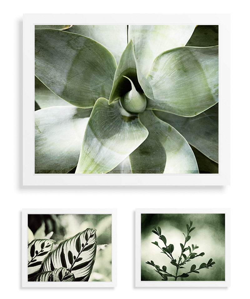 Green Nature Photography Print Set by CarolynCochrane.com | Botanical Wall Art