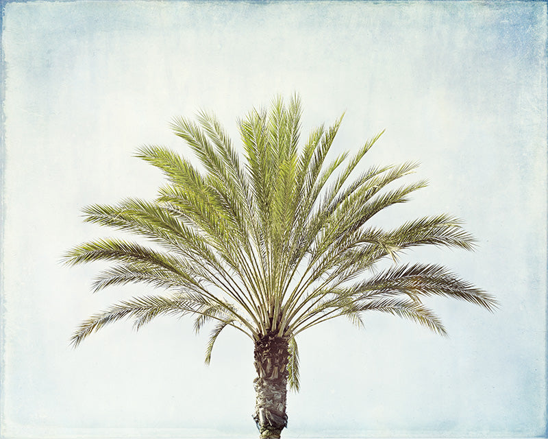 Palm Tree Photography Art Print by Carolyn Cochrane | Beach Photo