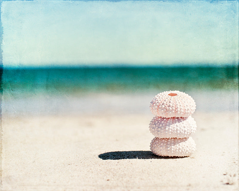 Seashell Photography Art Print by Carolyn Cochrane | Teal Beach Photo