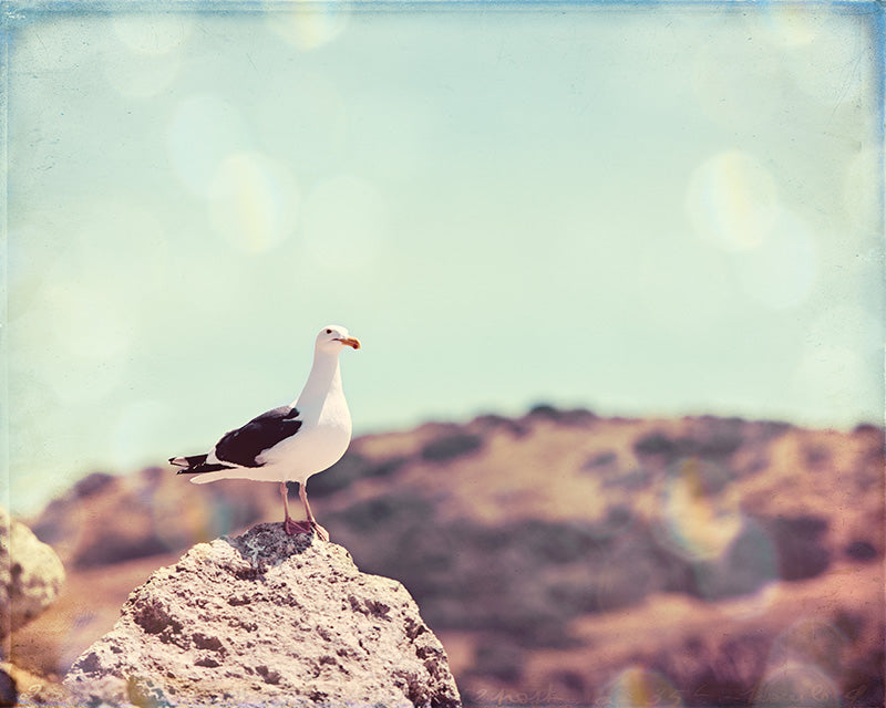 Seagull Beach Photography Print by Carolyn Cochrane | Coastal Photo