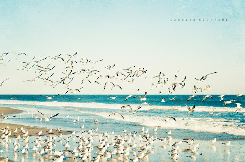 Seagulls Beach Photography by carolyncochrane.com