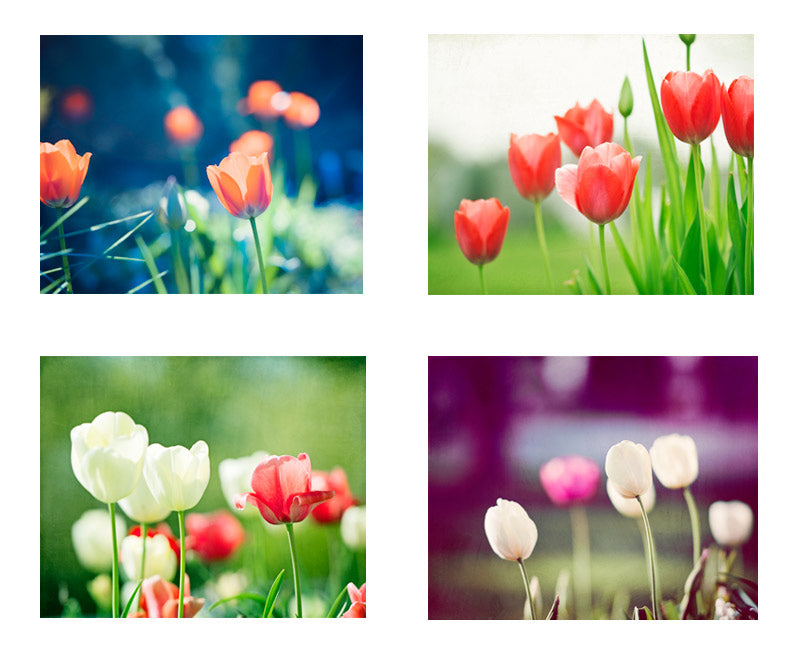 Colorful Tulip Flowers Photography by carolyncochrane.com