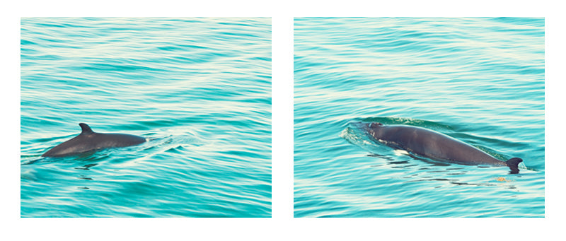 Whale Pictures by carolyncochrane.com