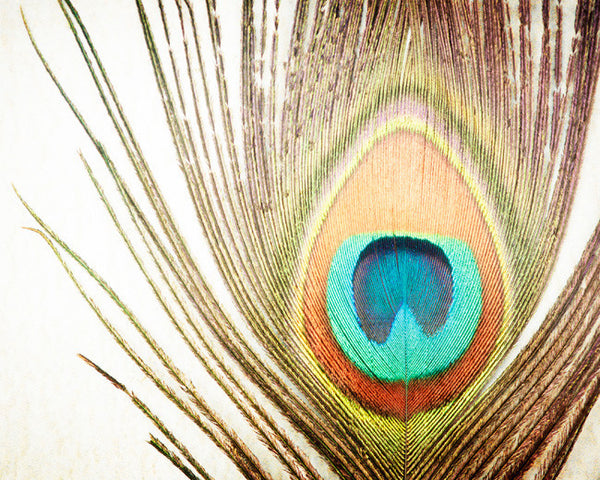 Peacock Feather Photography Art by carolyncochrane.com | Brown Teal