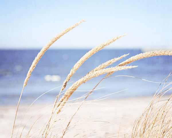 Beach Grass Photography Print by carolyncochrane.com
