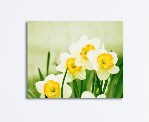 Yellow Daffodil Flower Canvas by carolyncochrane.com