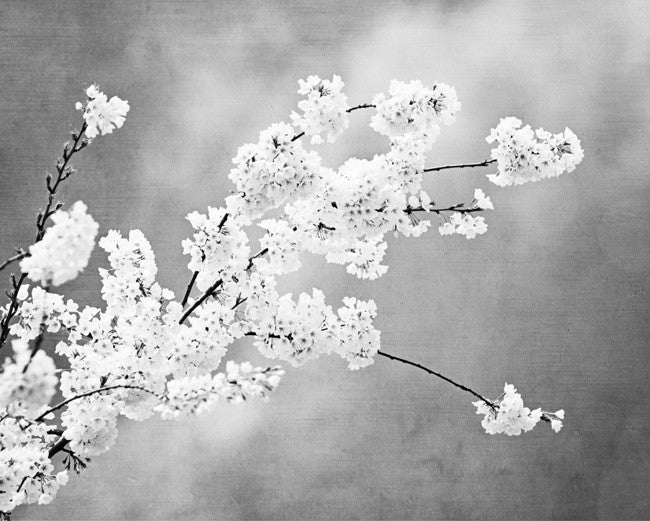 Black and white floral photography by carolyncochrane com