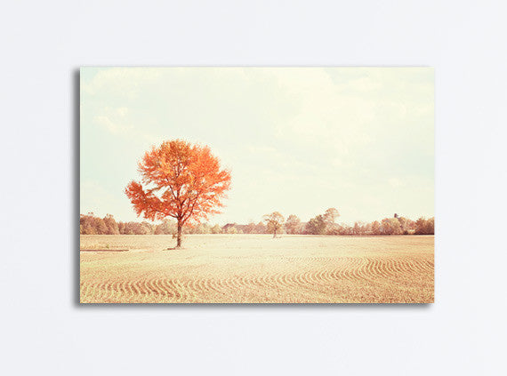 Autumn Trees Photography Canvas by carolyncochrane.com