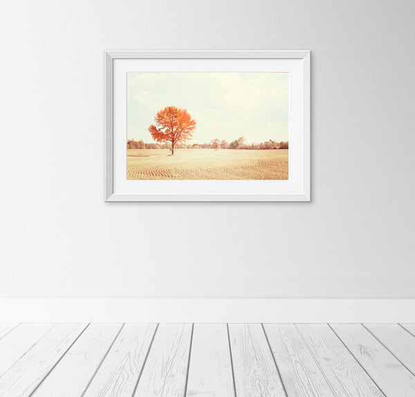 Autumn Trees Photography Print by carolyncochrane.com