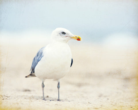 Seagull Photography Art