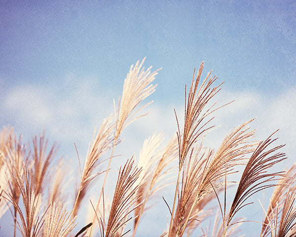 Blue Beach Grass Photography Art by CarolynCochrane.com