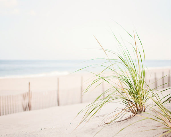 Beach Grass Photography Art Print by CarolynCochrane.com