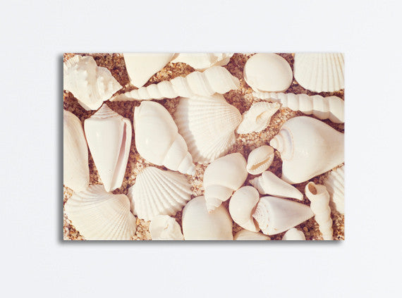 Seashell Canvas Art Print by carolyncochrane.com