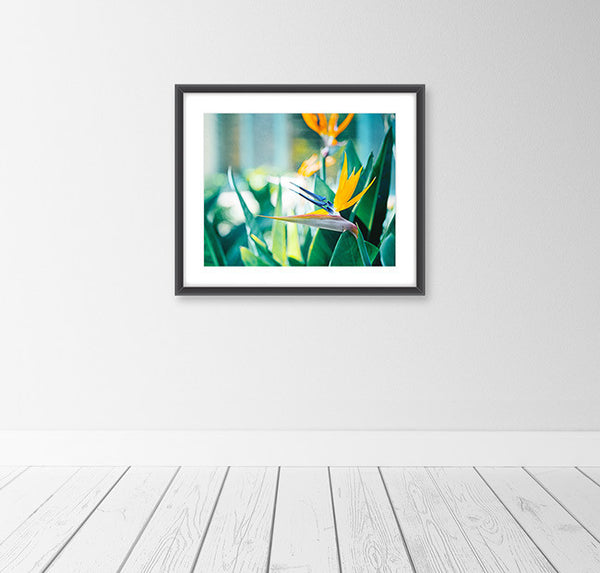 Bird of Paradise Photography Art Print by CarolynCochrane.com