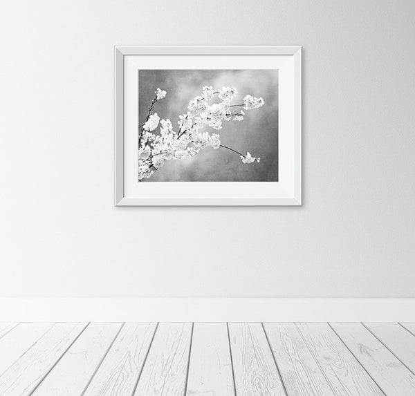 Black and White Floral Photography by carolyncochrane.com