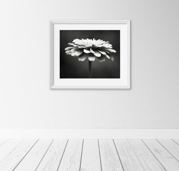Black and White Flower Photography by carolyncochrane.com