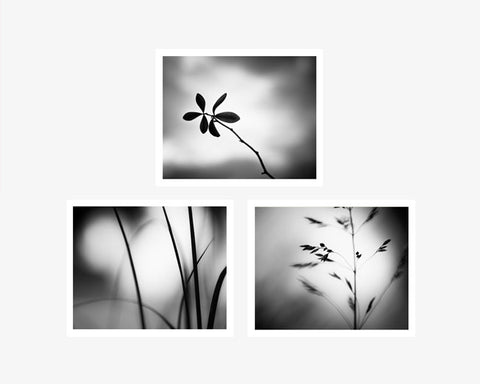 Black white photography set of 3
