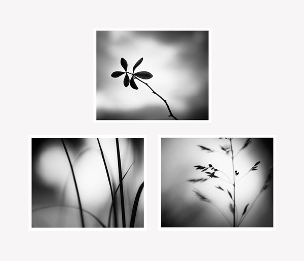 Black and White Nature Photography Prints Set by carolyncochrane.com
