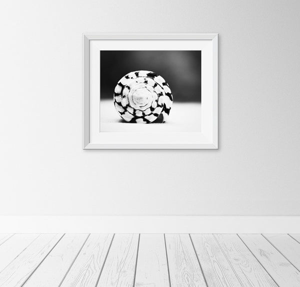 Black and White Seashell Art by carolyncochrane.com