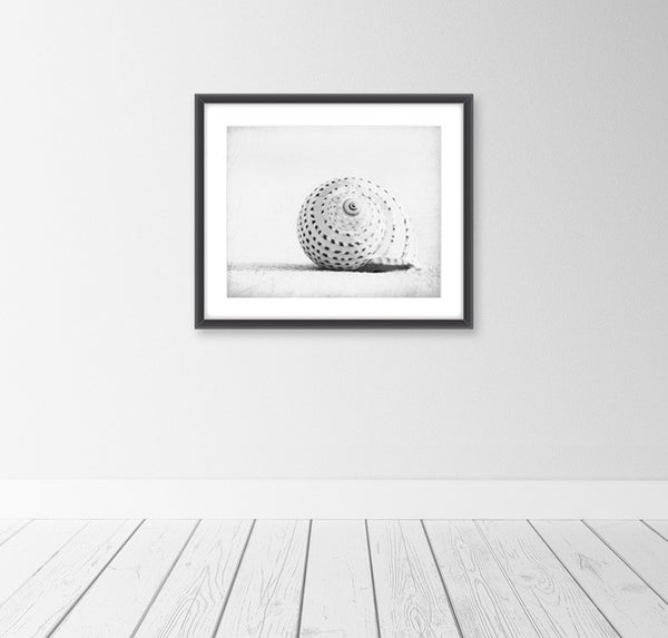 Black and White Seashell Print by carolyncochrane.com