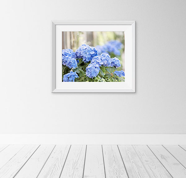 Blue Hydrangea Flower Photography Art Print by CarolynCochrane.com
