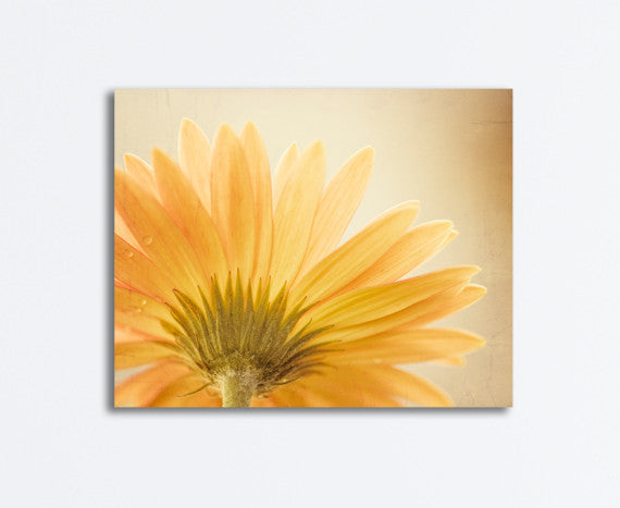 Yellow Daisy Flower Canvas by carolyncochrane.com