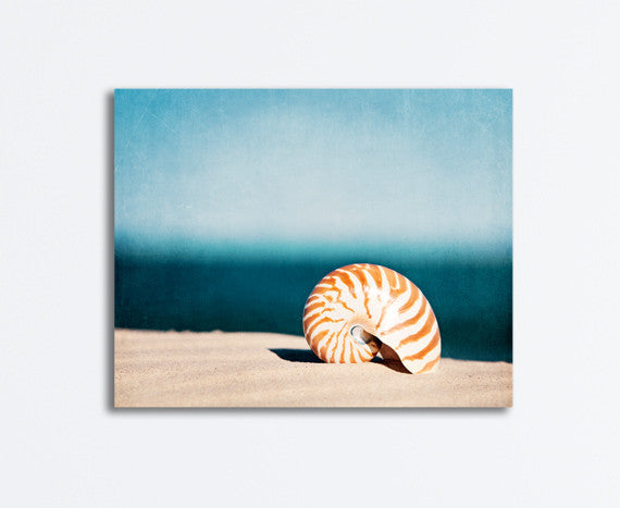 Seashell Pictures Canvas Art by carolyncochrane.com