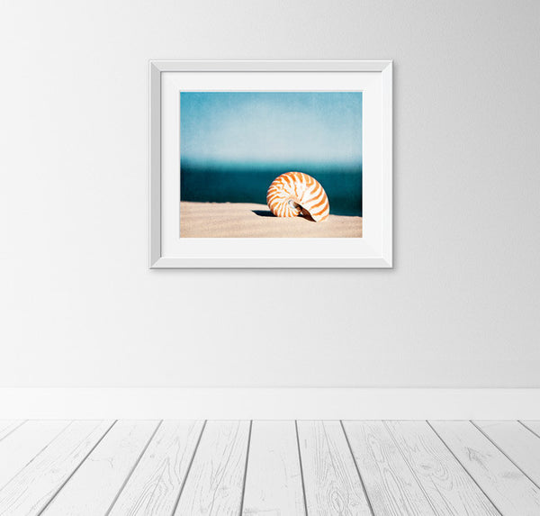 Seashell Pictures Wall Art by carolyncochrane.com