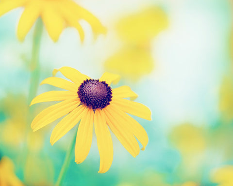 Yellow Turquoise Flower Photography by carolyncochrane.com