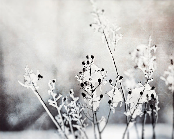 Black and White Winter Photography by carolyncochrane.com