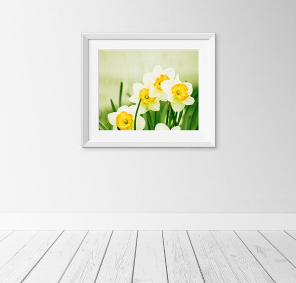 Yellow Daffodil Photography Print by carolyncochrane.com