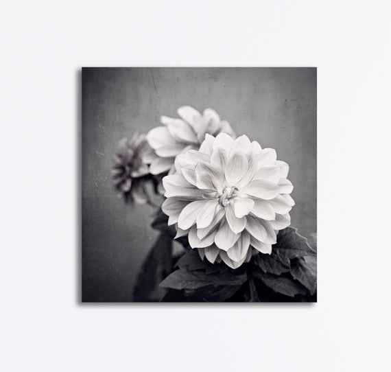 Black and White Dahlia Flower Photography Canvas by carolyncochrane.com