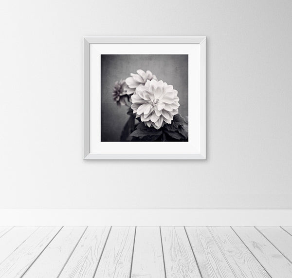 Black and White Dahlia Flower Photography by carolyncochrane.com