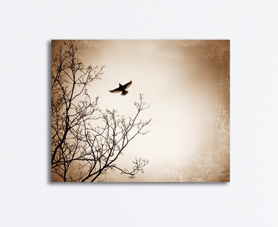 Brown Black Bird Canvas by carolyncochrane.com