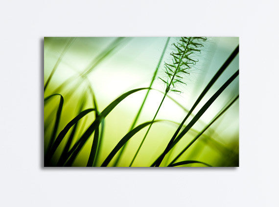 Green Nature Canvas Art by carolyncochrane.com