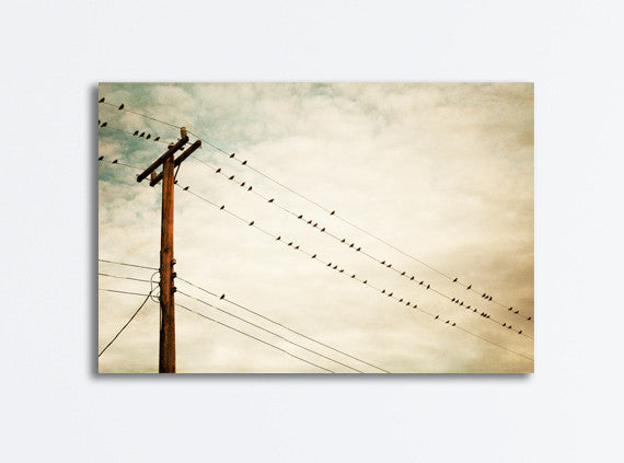 Beige Bird on Wire Canvas Photography by carolyncochrane.com