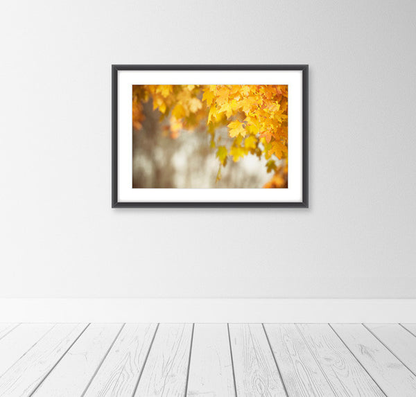 Autumn Leaves Photography by carolyncochrane.com | Orange Yellow Art