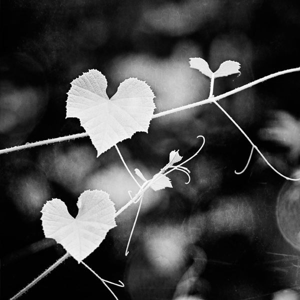 Black and White Heart Nature Photo by carolyncochrane.com