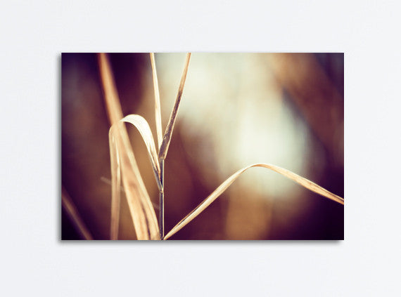 Modern Brown Nature Canvas Photography by carolyncochrane.com