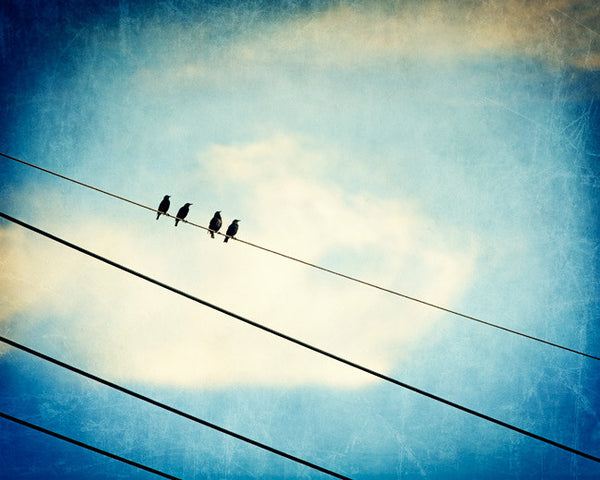 Blue Bird on Wire Photography by carolyncochrane.com